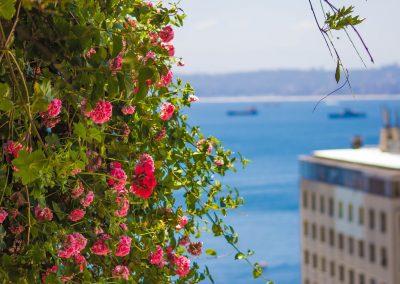 Vista flores